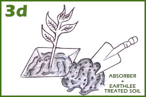 Soil mix with Absorber, Asilee & Earthlee for tree planting