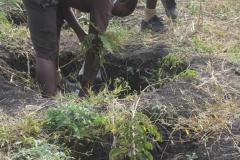 School children of Kanani school in Watamu planting trees using Organix products