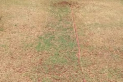 Absorber (water retainer) and Asilee (organic soil conditioner) applied to sectioned part of lawn. Despite dry conditions, the treated section is doing better than the rest of the lawn.