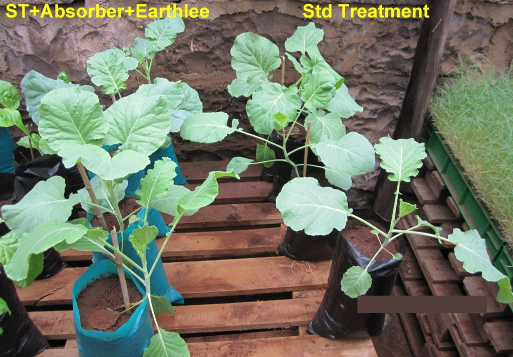Comparison of Vegetables treated with standard treatment with those treated with Earthlee and Absorber
