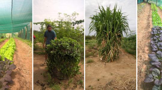 Barefoot Soulutions in Nakukulas, Turkana County