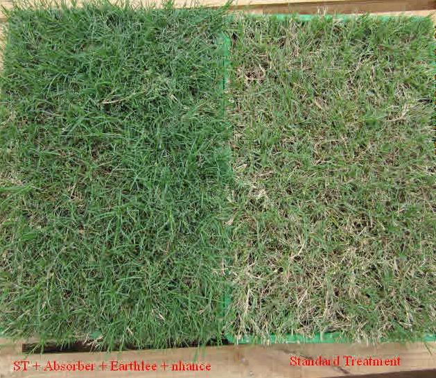Landscaping: Maadi River Grass
