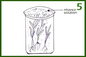 Landscaping-step 5: Planting grass using organic farm inputs